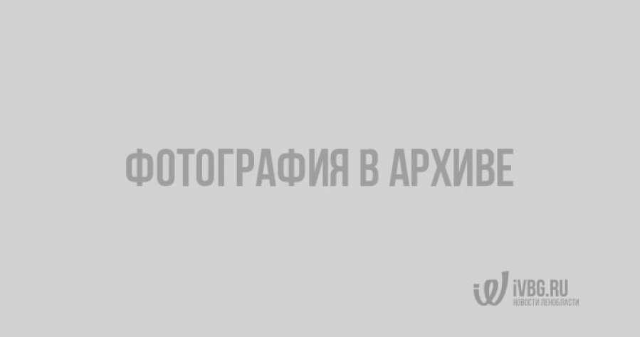 Выборгские тушканы засветились в деле главы Федеральной таможенной службы Бельянинова