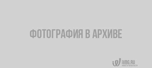 Девочки для битья Шухрата Шукурова