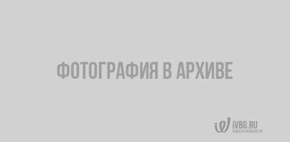 На следующей неделе снег в Выборге начнет таять
