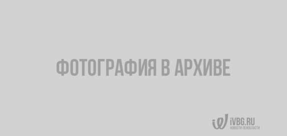 Погода в Выборге по данным сайта gismeteo.ru