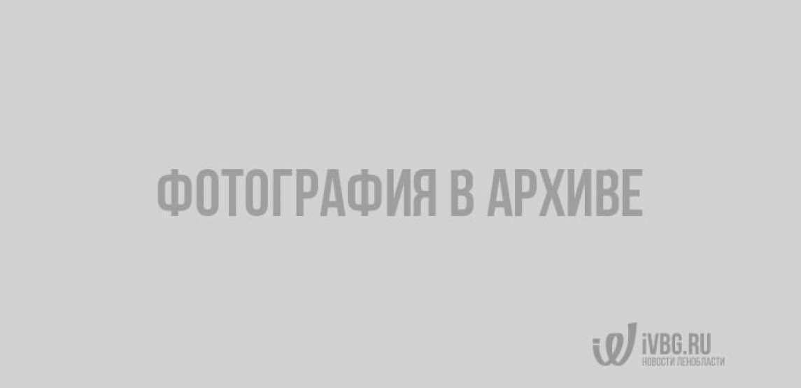 Выборгский музей-заповедник всё расскажет и покажет