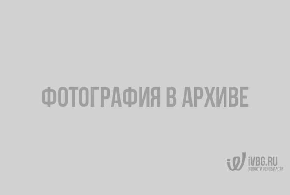 Реставраторы начали работы на Южном валу Выборгского замка