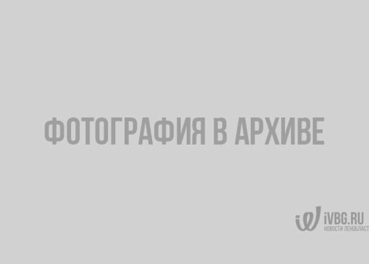 В Выборгском замке открыли кошачью выставку