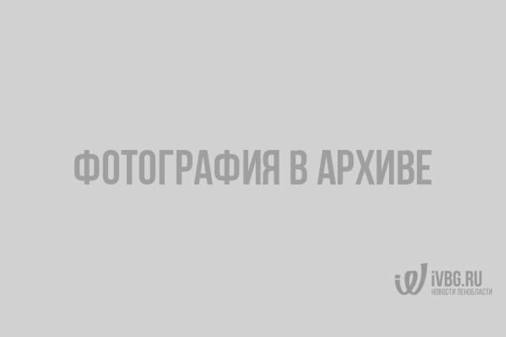 Выборгский замок облачился в День города в рыцарские доспехи