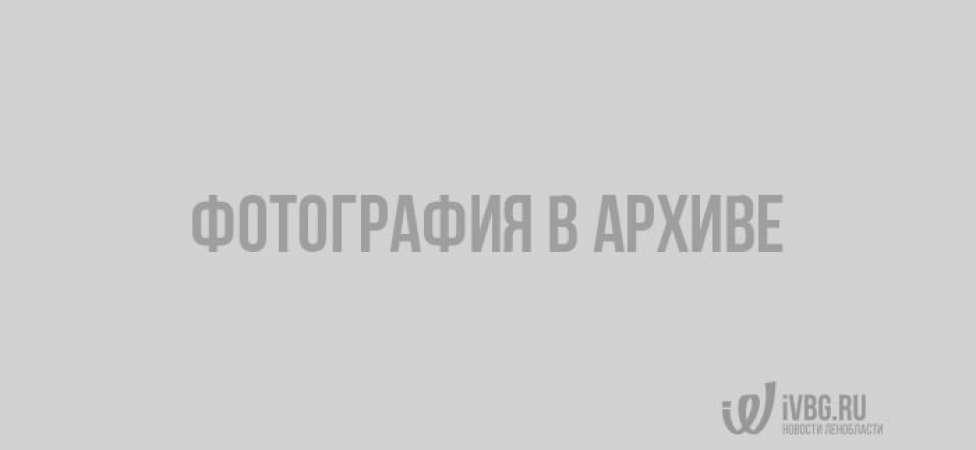 На границе под Выборгом задержали четверых нелегалов