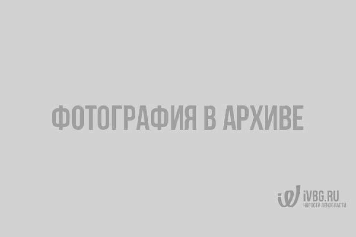Волшебство золотой осени в Выборге: 10 фото