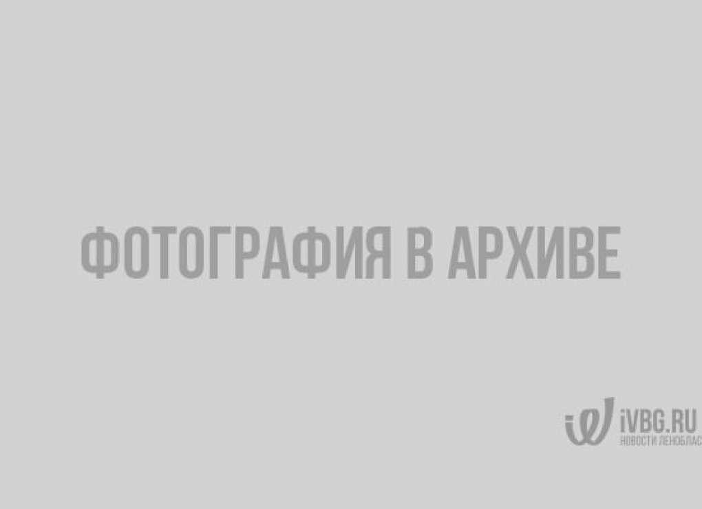 Десять тысяч жителей Выборгского района отдохнули бесплатно