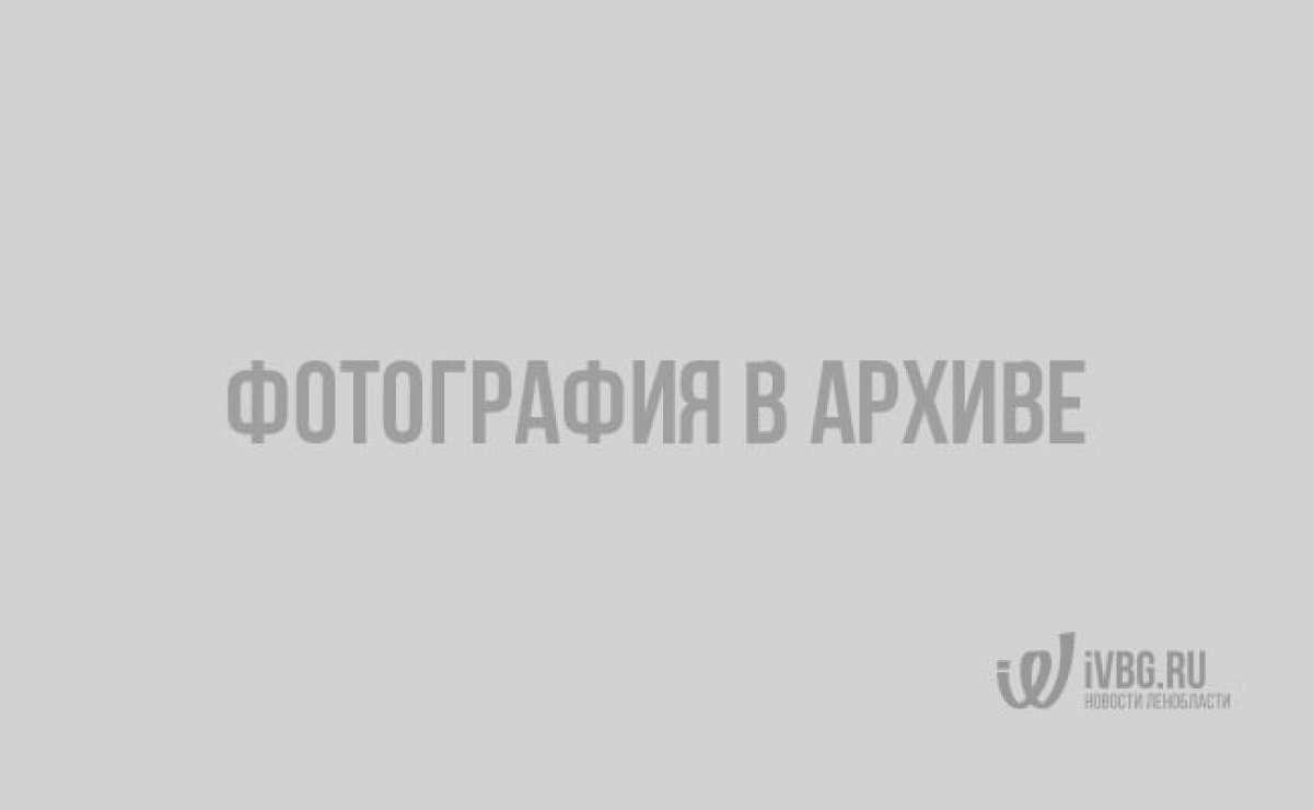 """Я Путина видела"". Журналист ivbg о пресс-конференции президента"