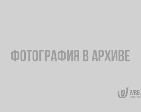 Работники ЖКХ в Петербурге «облагородили» сад с помощью веток и скотча
