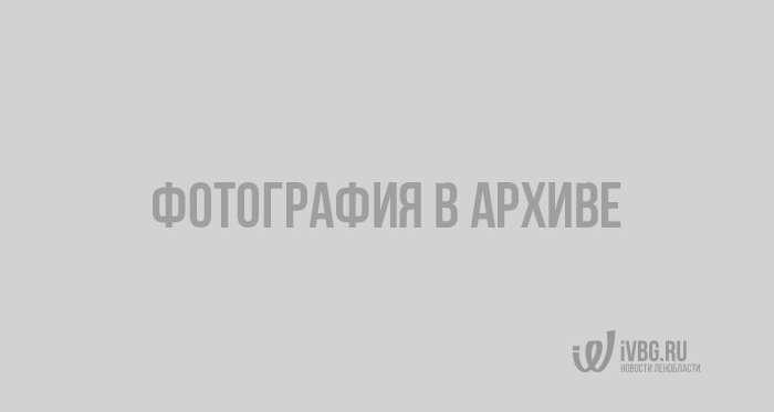 Задержанные за хранение 100 кг веществ торговцы оказалась контрабандистами