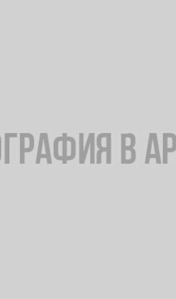 Цена жизни: штрафы за сбитых животных. Инфографика