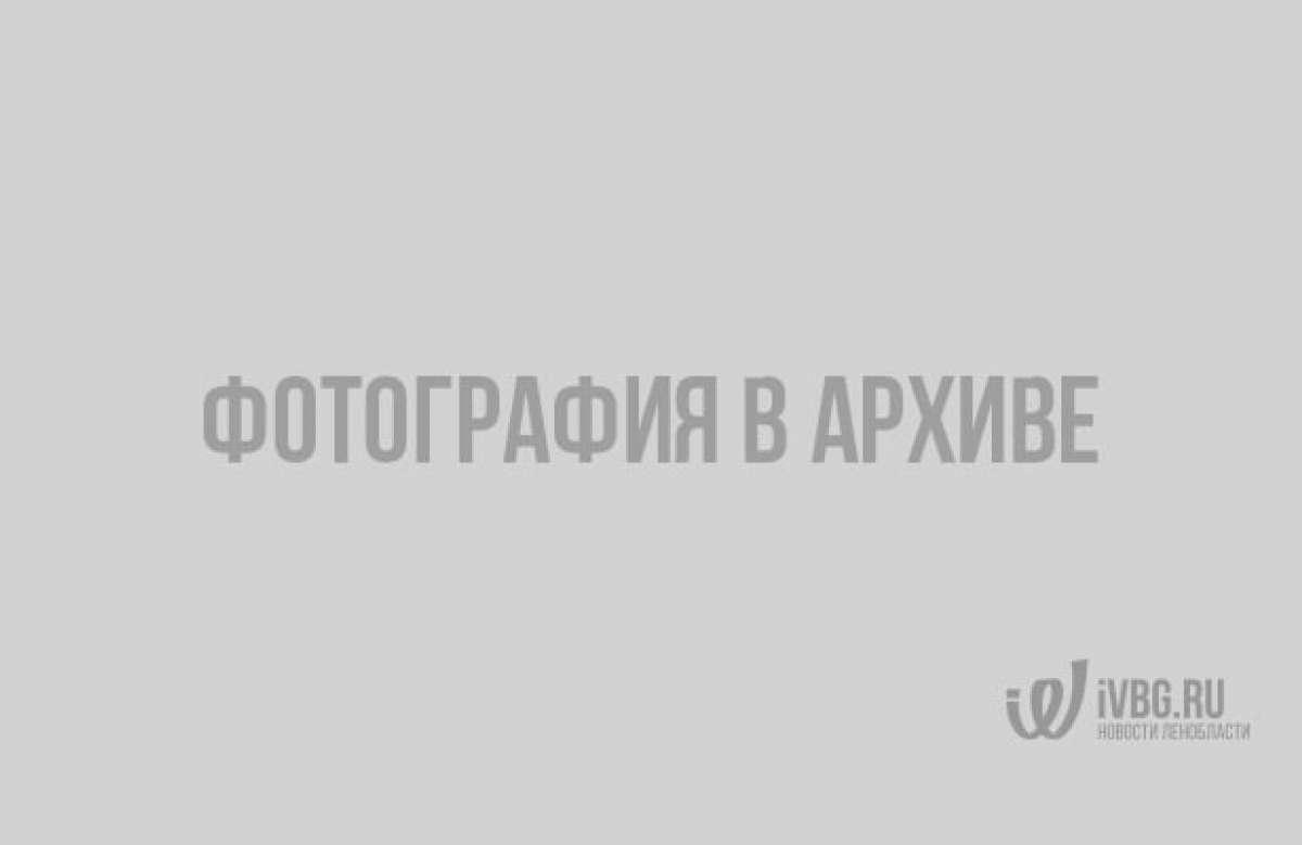 В Гатчине отключили свет на весь день