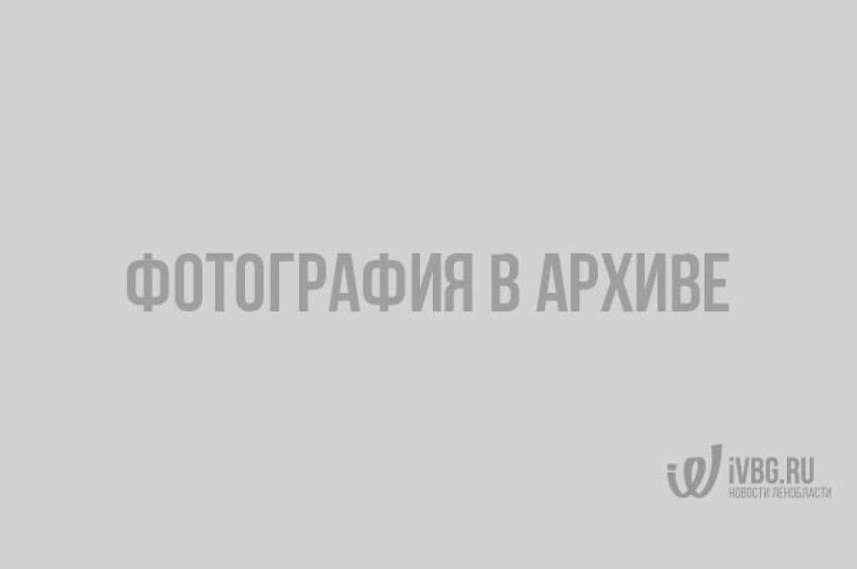 Огромная стая чаек сделала озеро в парке Гатчины белым