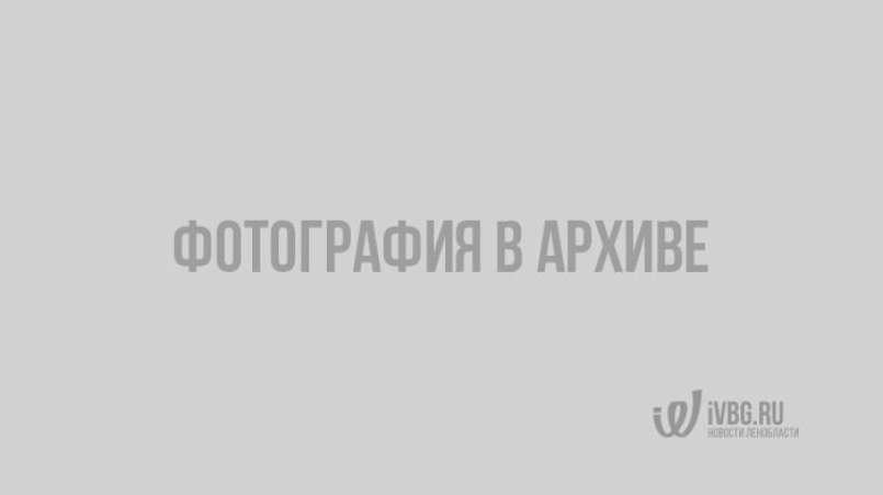 Неизвестный камнем разбил стекло двигающейся электрички в Гатчинском районе
