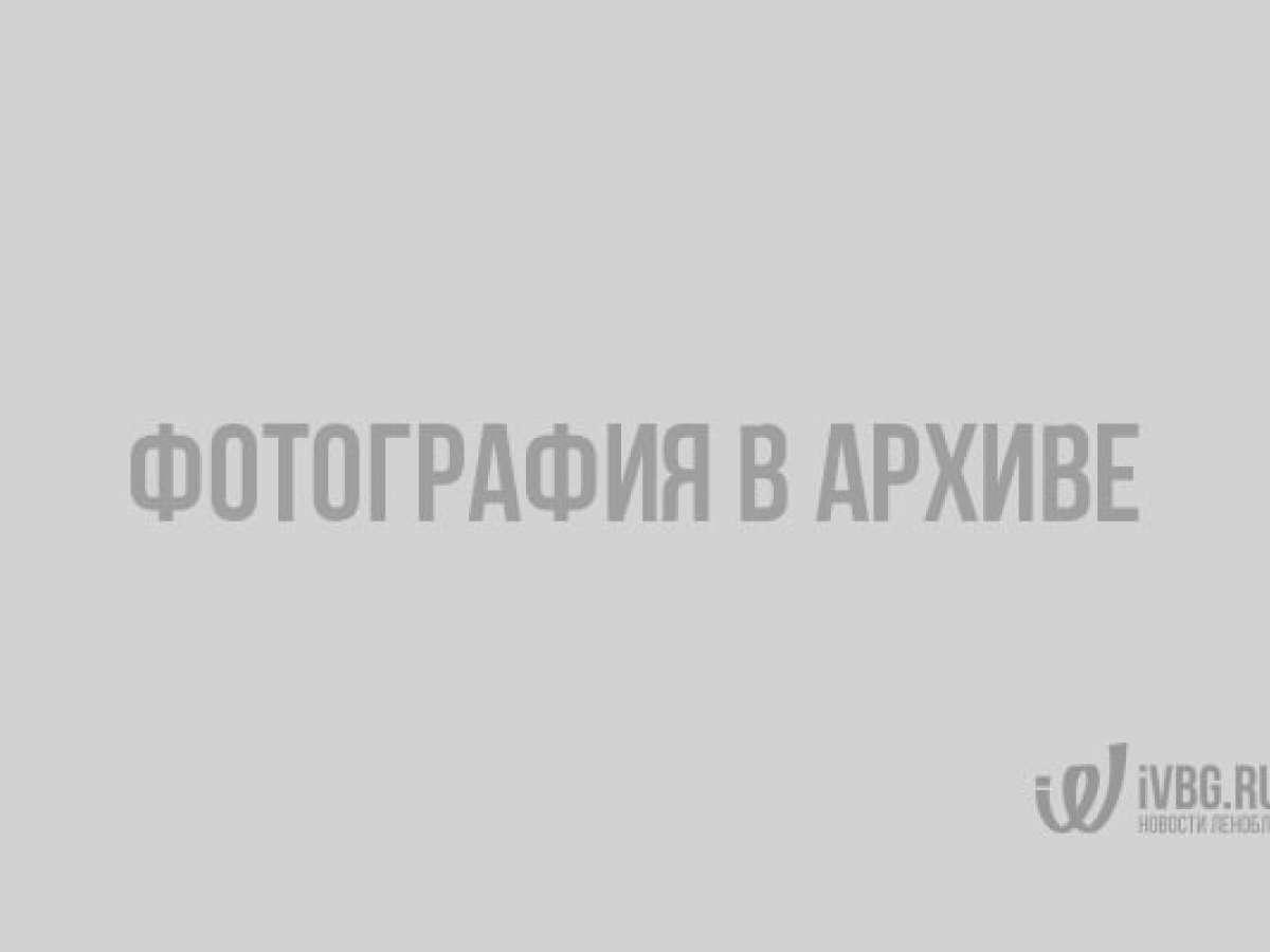 Рейсовый автобус съехал в кювет в Петергофе в результате ДТП