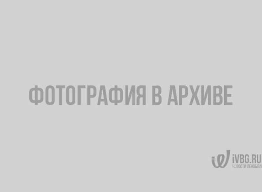 На Синявинских высотах завершились сражения 75-летней давности. Видео