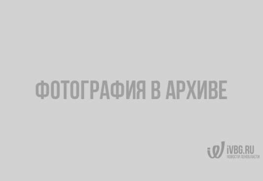 Несколько трупов собак лежат на обочине в Выборге