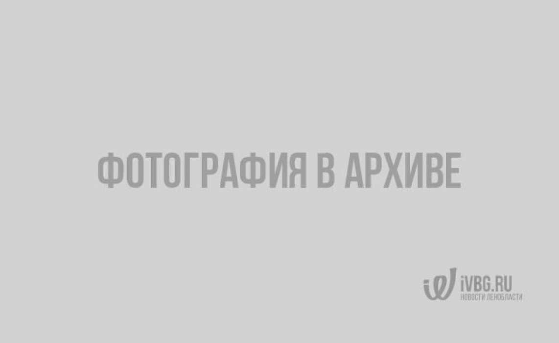 Рыбалка в Ленобласти. 8 самых