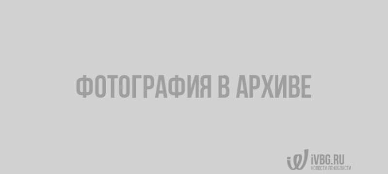 Фото: crimea-news.com
