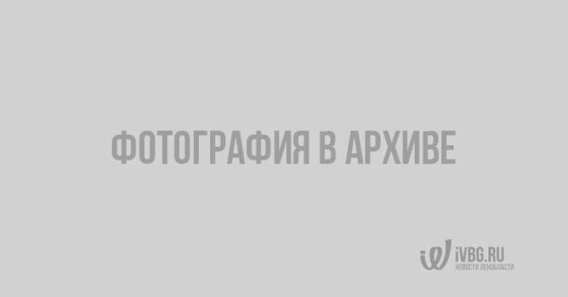 устройство позволяющее общаться с растениями